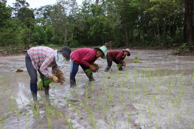 GEPA-Green-Net-Reissetzlinge-pflanzen_aw
